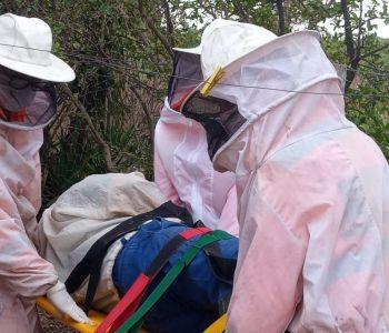 Homem sofre queda de altura ao tentar captura enxame de abelhas na zona rural de Japaraiba